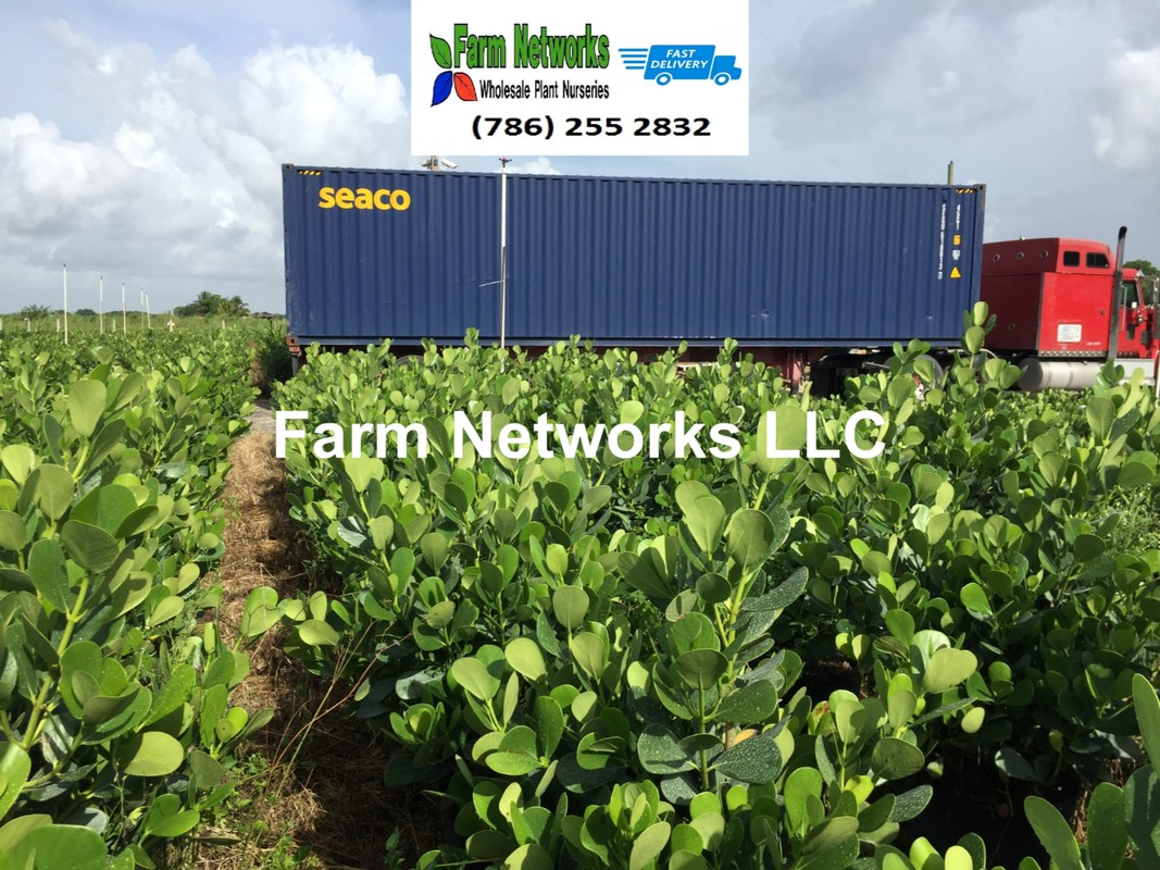Farm Networks Llc We Are Florida S Largest Grower Of